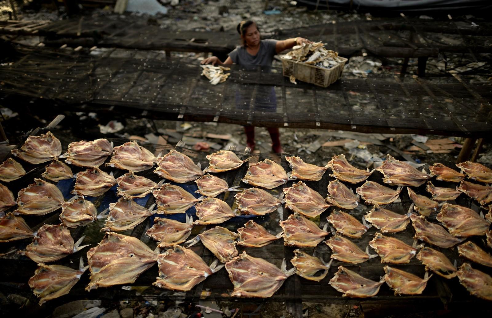 En kvinne samler tørka fisk i Manilla. Den filipinske kysten er utsatt for tyfoner, og landet ønsker at klimatoppmøtet i Paris skal ende i en bindende avtale om å kutte utslipp av drivhusgasser.