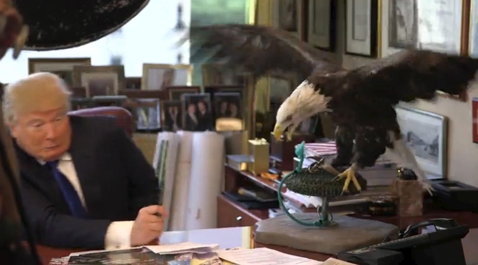 Alt gikk ikke helt etter planen da presidentkandidat Donald Trump skulle posere for bilder til magasinet TIME sammen med en havørn. Ørna skal ha hakket på Trump flere ganger.