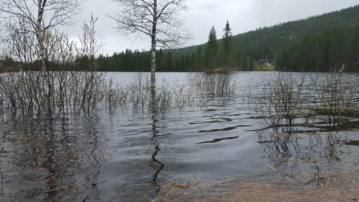 Flom Engerdal - Foto: Ole Martin Sponberg/NRK