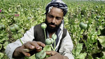 Opiumsbonde i Afghanistan