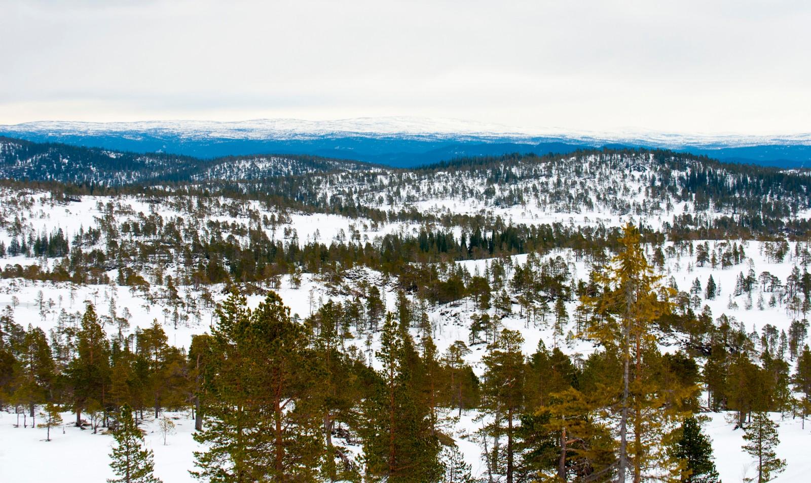 Fortsatt snø på Jårakjølen i Melhus