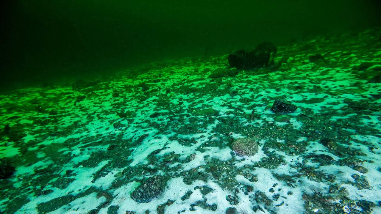 Et hvitt lag av bakterier dekker havbunnen