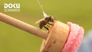 Dokusommer: Hva dreper biene våre?