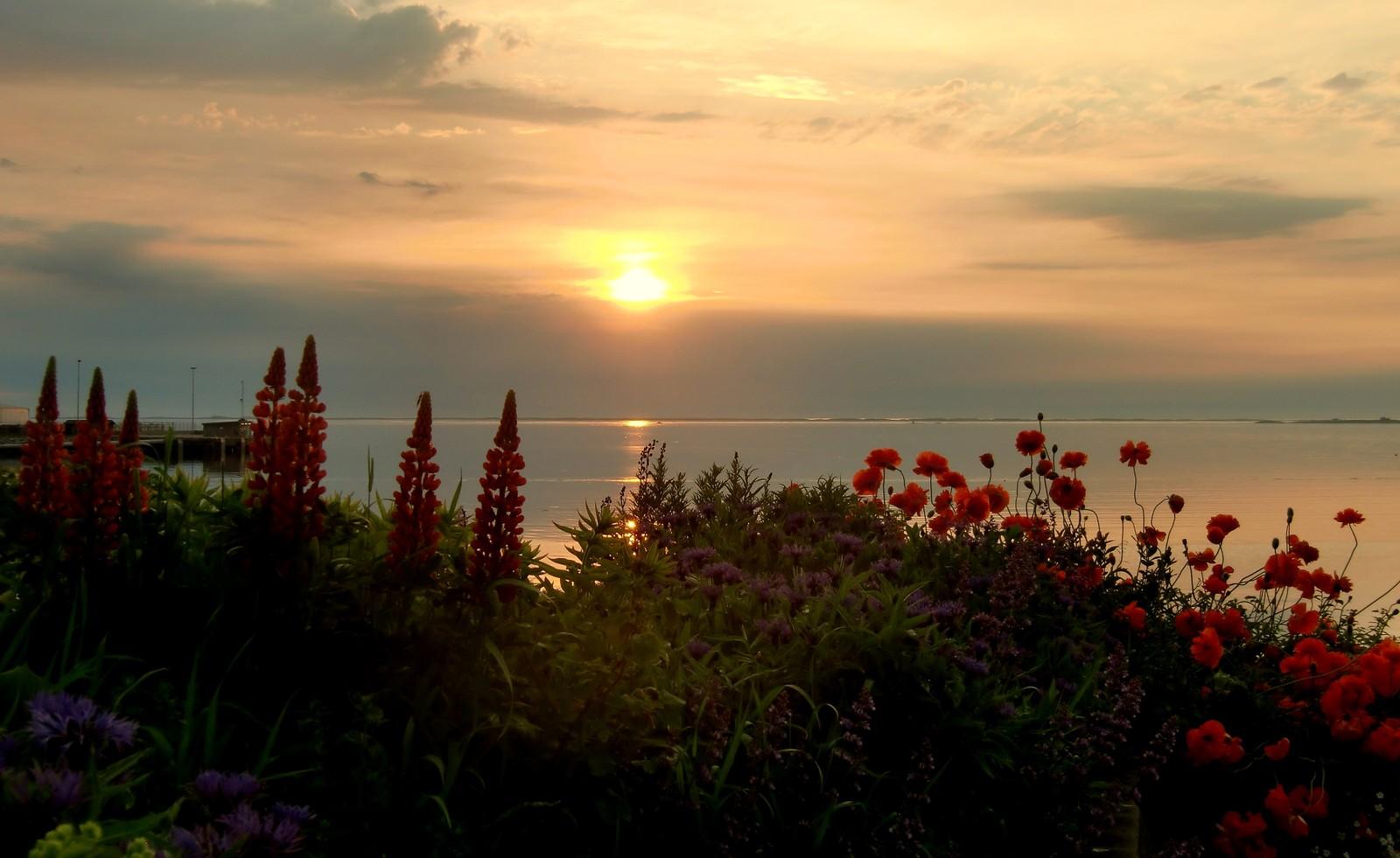 Sommerkveld på Uthaug