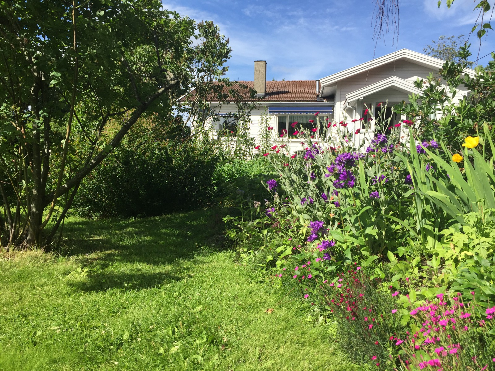 Et hvitmalt hus i en frodig hage.