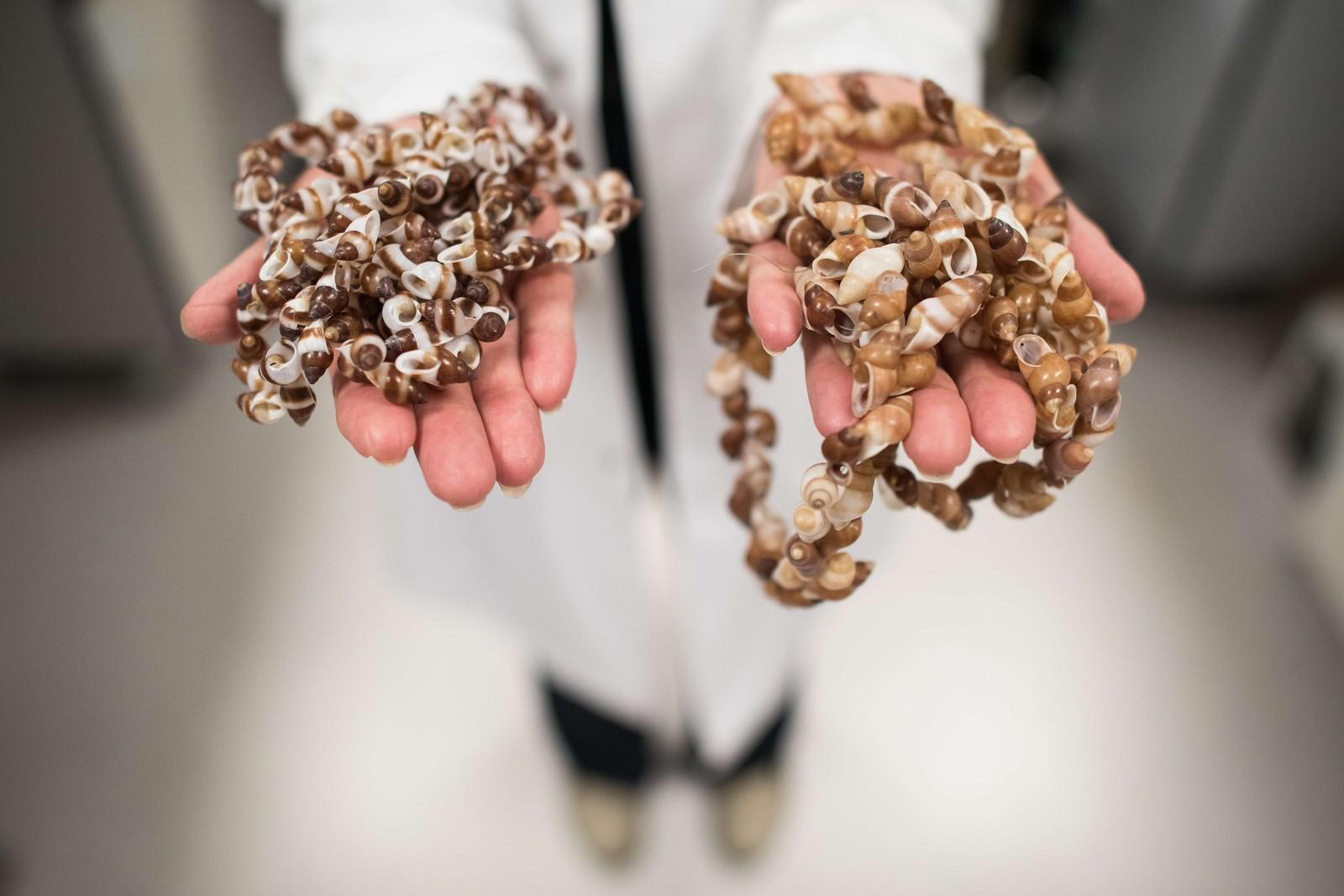 Doktor Ann Clarke viser fram sneglene som er med i prosjekt Frozen Ark, hvis formål er å bevare DNA fra utrydningstrua arter. Forskerne snakker nå om «Den sjette masseutryddelsen», og prosjektet er et tiltak for å bevare DNA før artene kan risiker å forsvinne for godt.