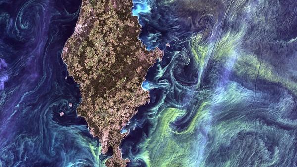 Er giftige alger årsaken til Alzheimer og Parkinsons?