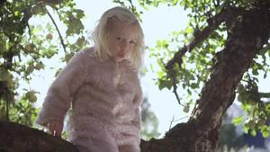 Maja kan plystre i treet!