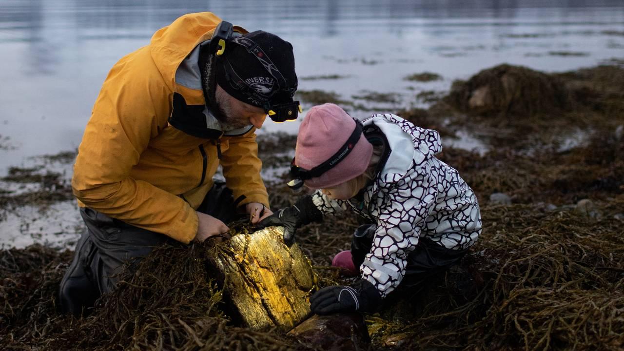 Audun Rikardsen og datteren med gul bøtte i fjæresteinene