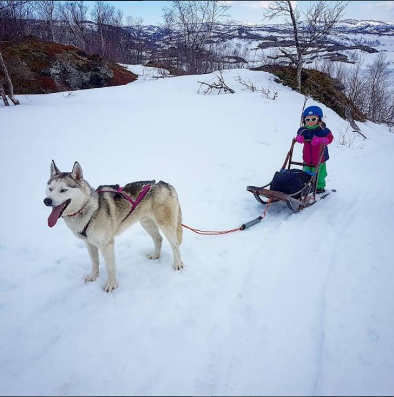 Alma Sofie (5) og Kapperi kjører tur med teltet i hundesleden. Vårsnøen sitter lenge i.