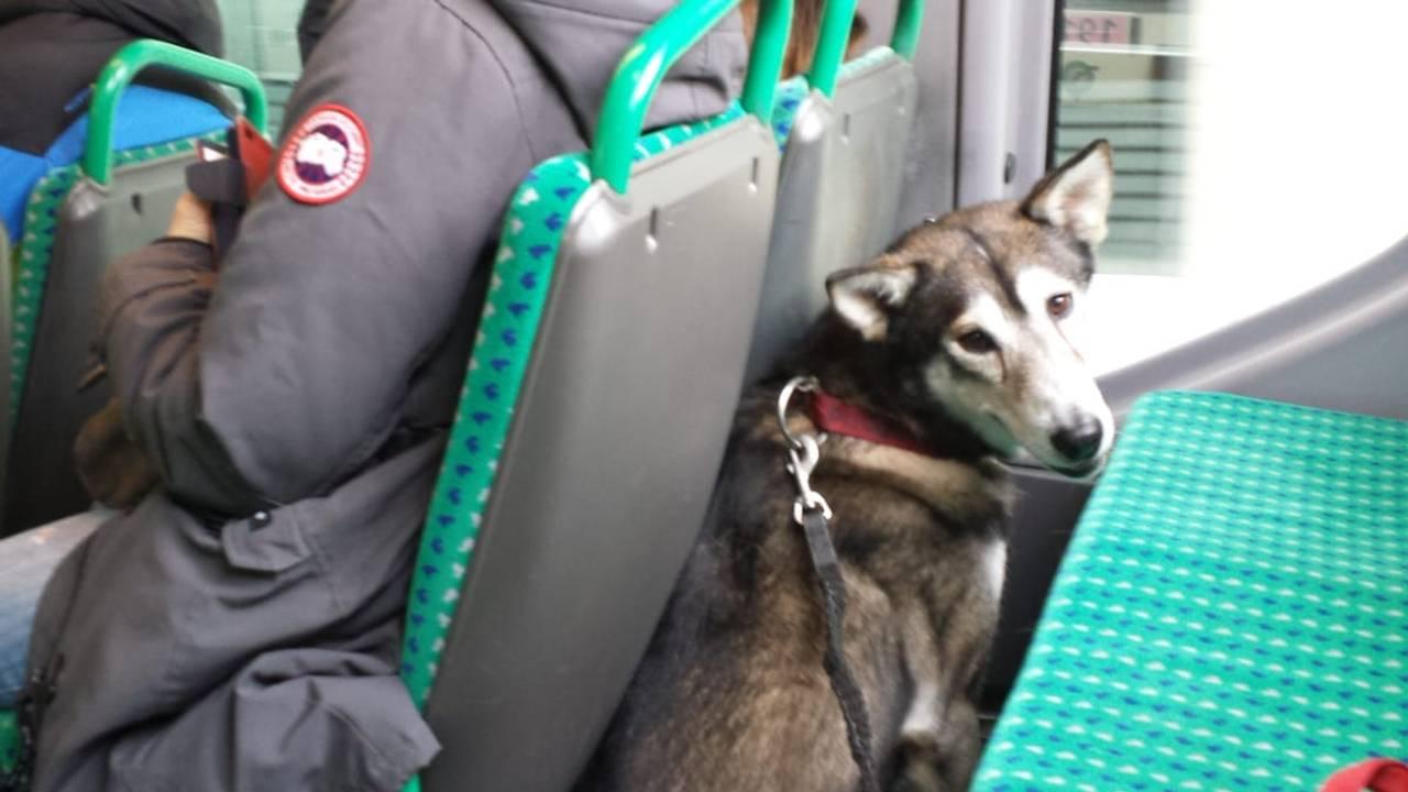 Dodo på bussen