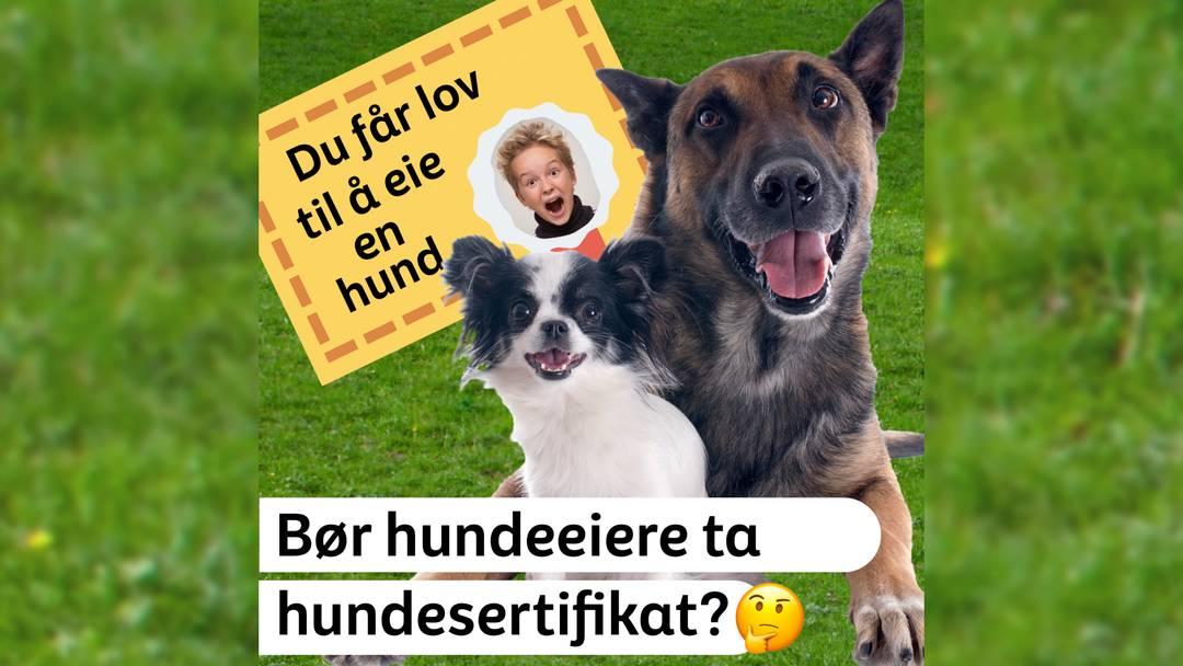 Bilde av to huner og et fiktivt hundesertifikat. Tekst i bilde: Bør hundeeiere ta hundesertifikat?