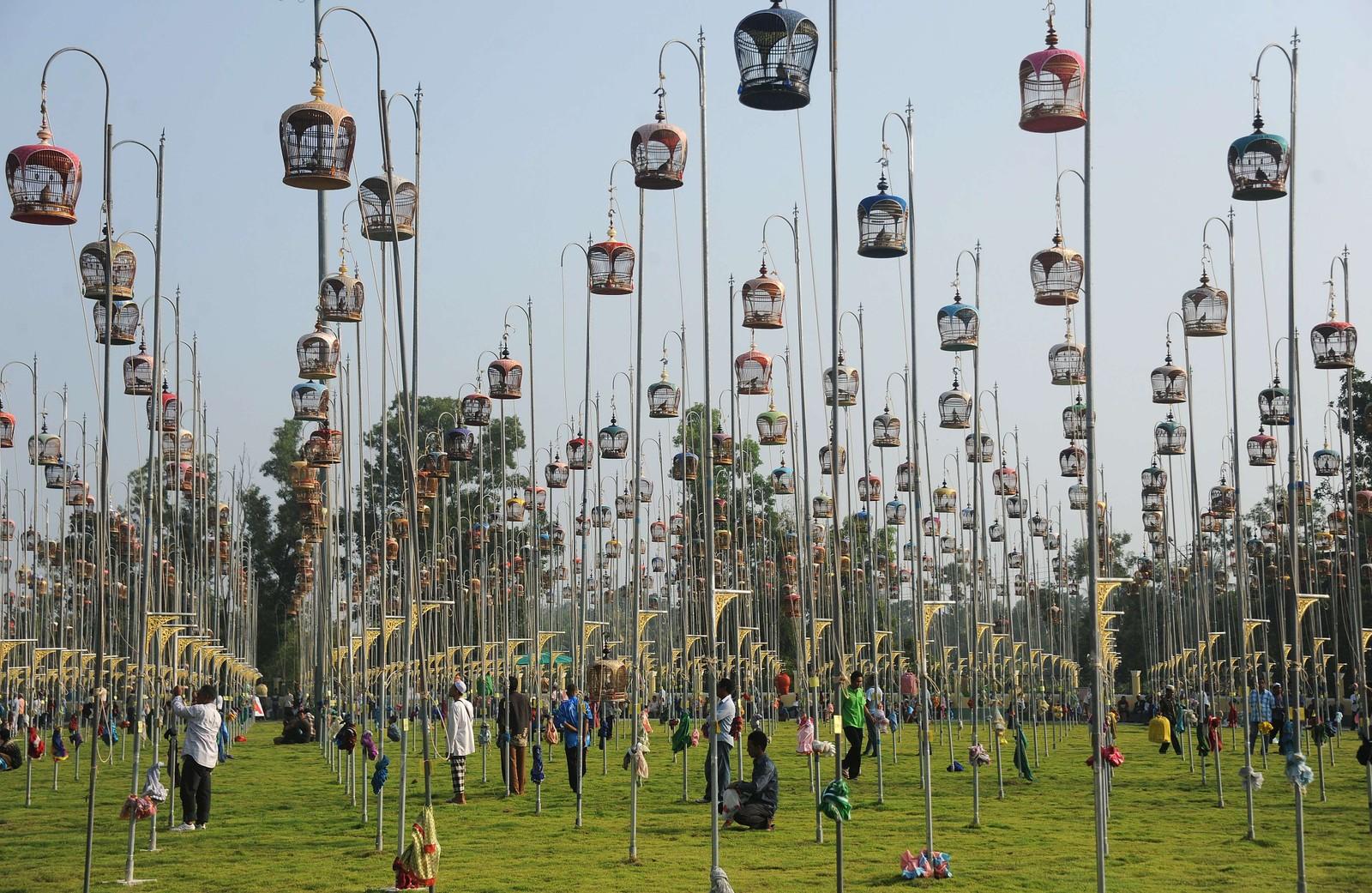 Fugler i bur deltar i en fuglesang-konkurranse i Thailand. Over 1000 fugler fra Thailand, Malaysia og Singapore deltar.