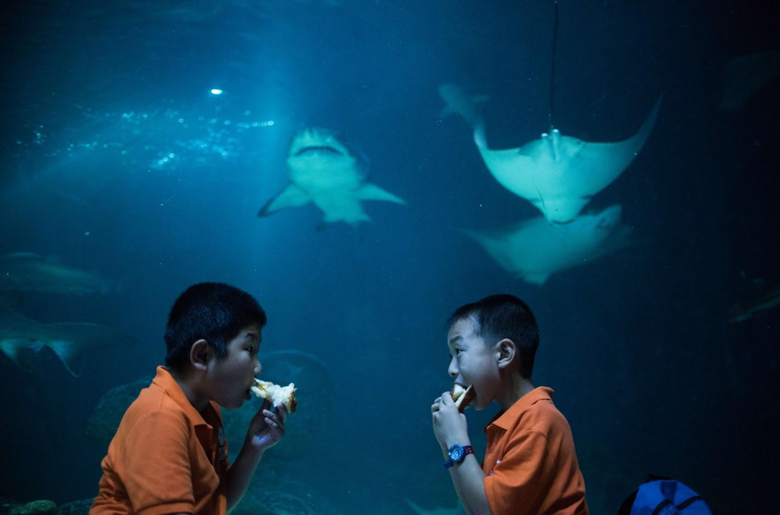 Lunsj? To skolegutter spiser sin formiddagsmat mens en rokke og en hai ser (sultent?) på. Bildet ble tatt i forbindelse med en overnatting i Changfeng-akvariet i Shanghai, som ble arrangert denne uka.