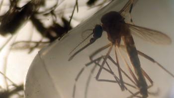 Zikaviruset