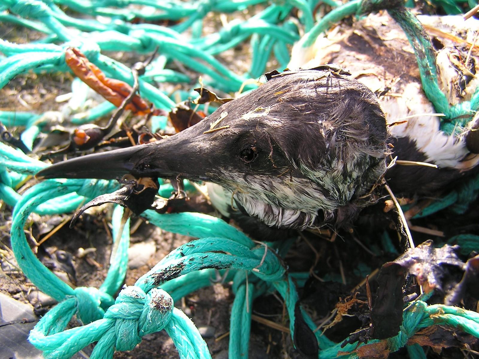 Det er mange som lider av vår forsøpling.