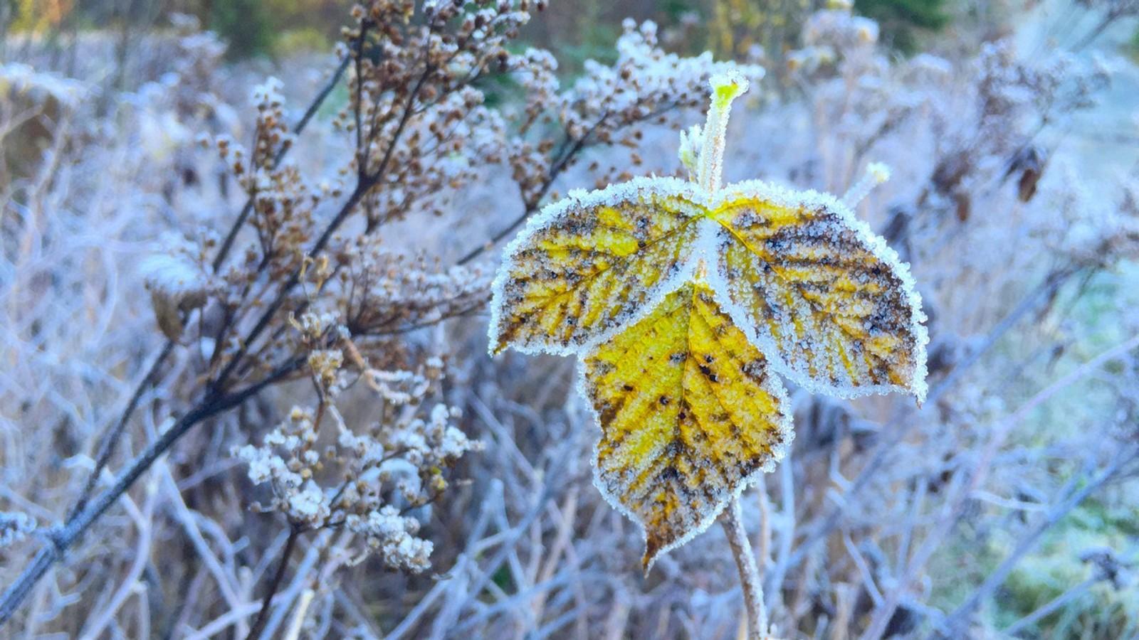 Frost i Estenstadmarka