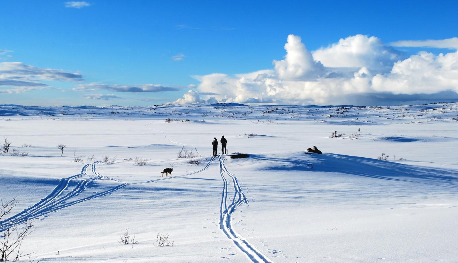 Sulsjøan i Verdal