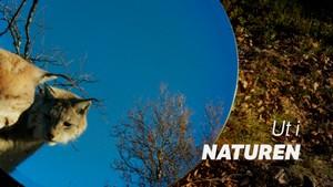 Ut i naturen: Ung i villmarka