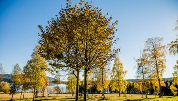 Høst i Oslo. Her fra Maridalen.