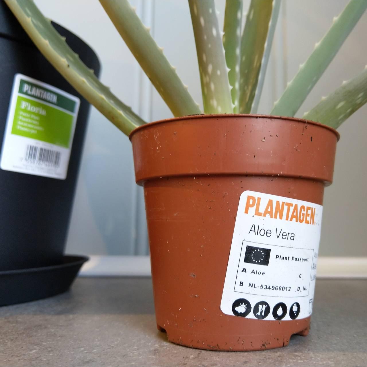 Få med deg navnet på planten