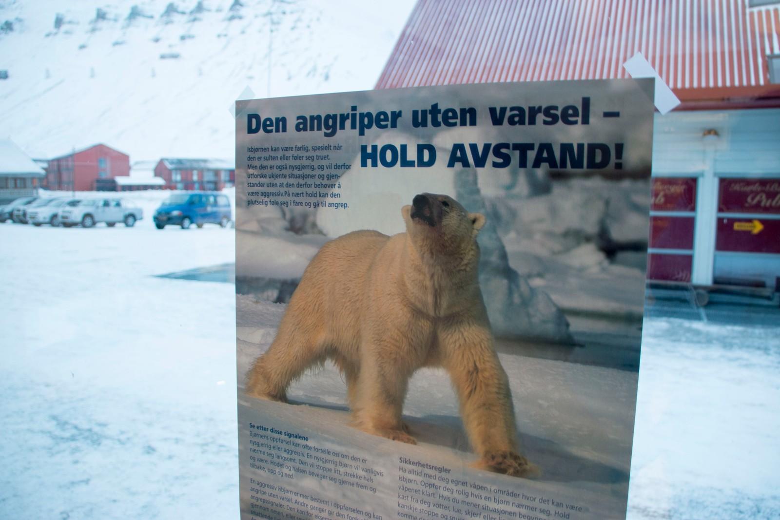 Hold avstand fra isbjørnen!