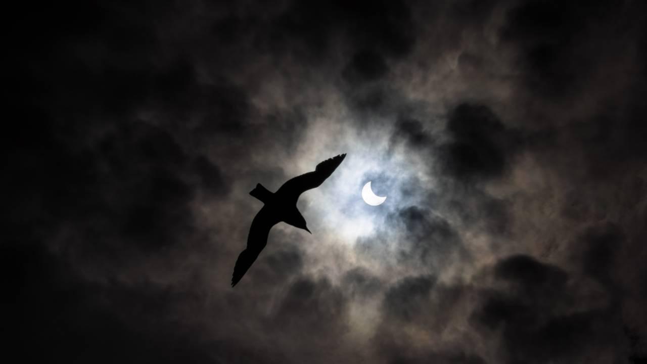 Delvis solformørkelse, Vadsø