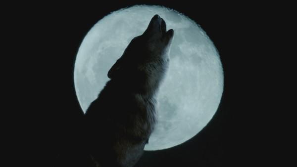 Blant vanlige mennesker går de; halvt ulv, halvt menneske. Men ulvingene må ikke bli oppdaget! Tysk-britisk fantasyserie.