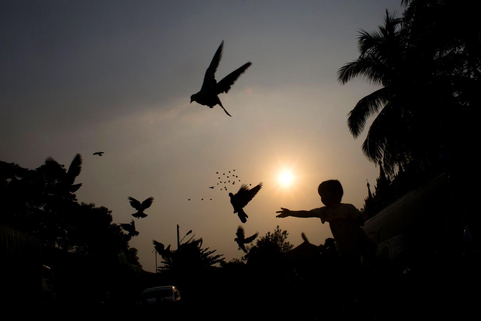 En gutt mater duer i Yangon i Myanmar.