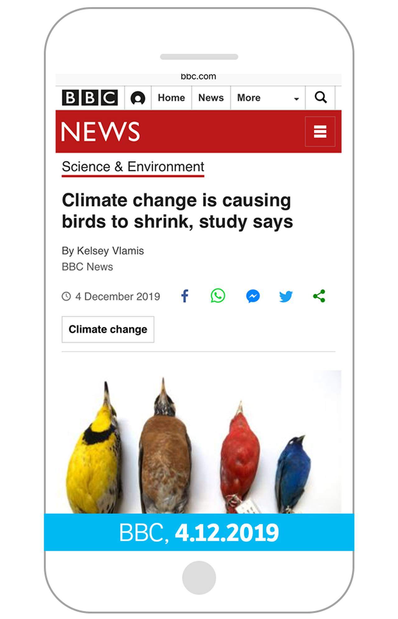 Cliamte change is causing birds to shrink