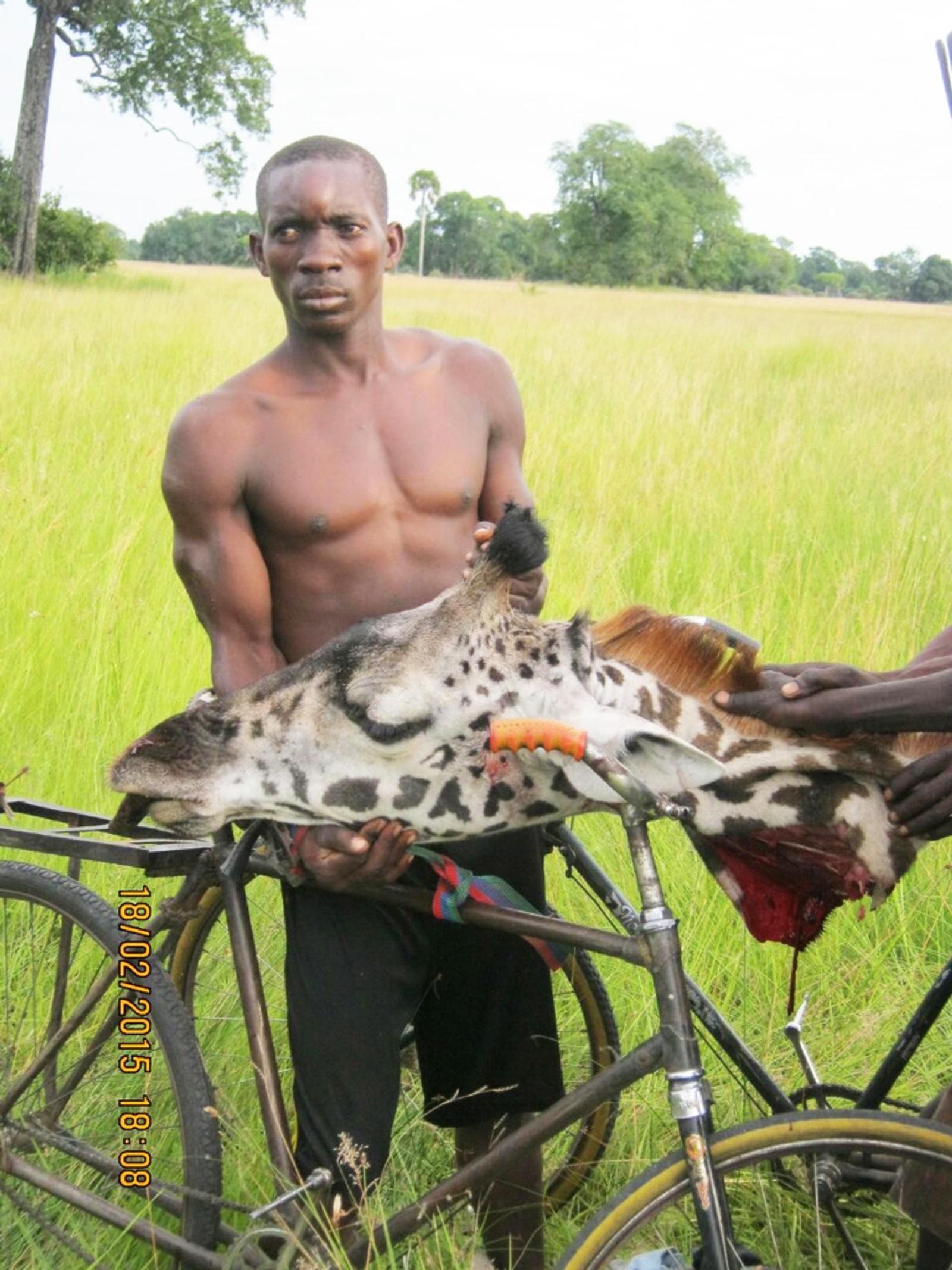 Krypskytter på sykkel med sjiiraffhode i Kongo.