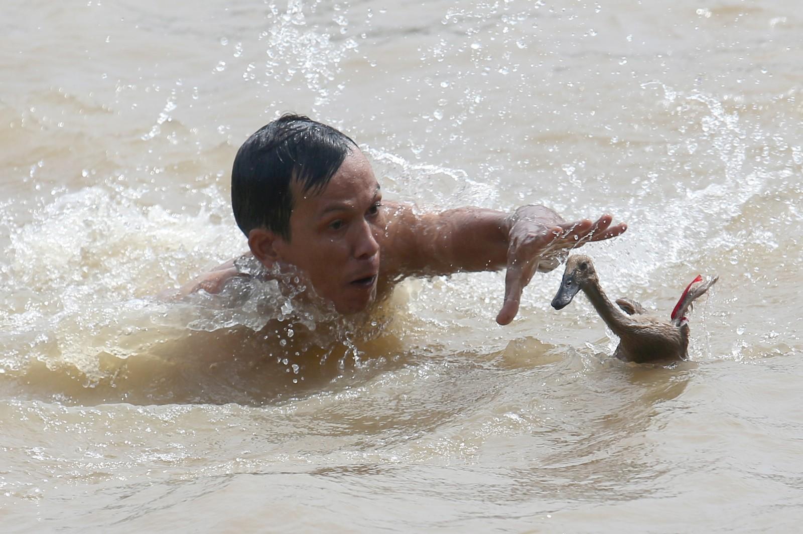En mann forsøker å få tak i en and under en konkurranse under dragebåtfestivalen i Tanggerang i Indonesia. Festivalen arrangeres hvert år den femte dagen i den femte måneden i den kinesiske kalenderen.