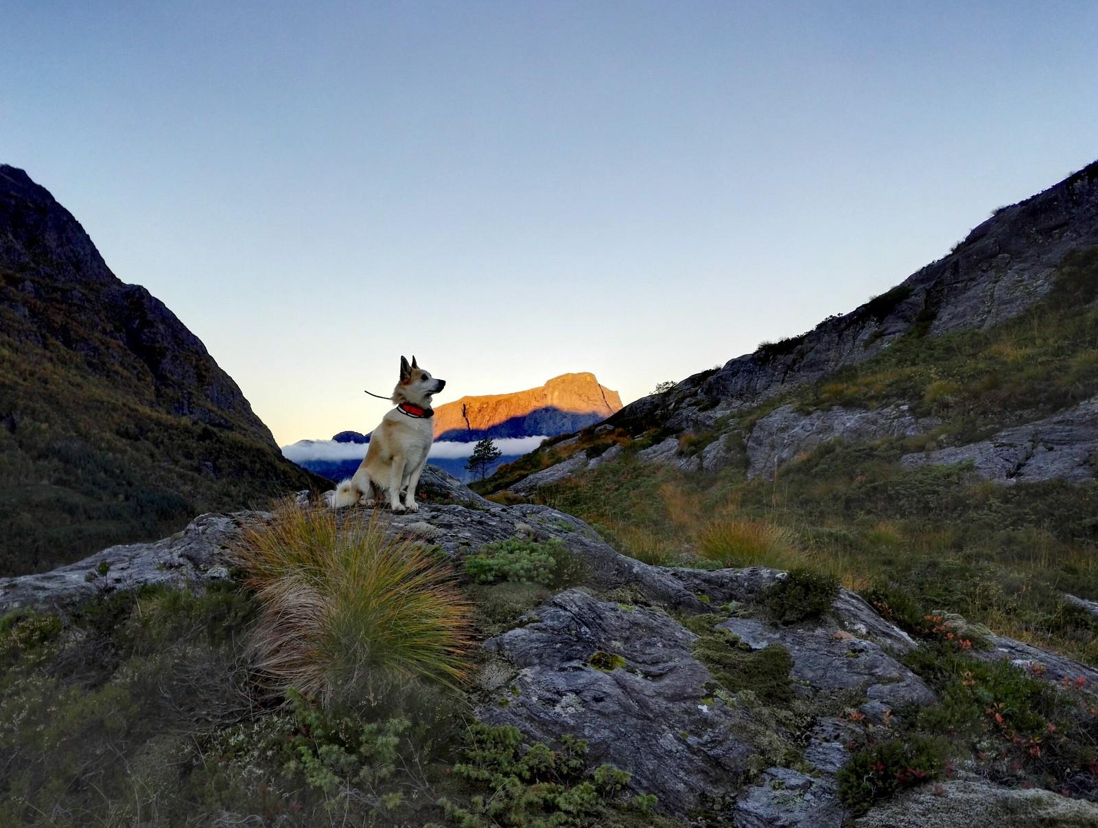 Hjortejakt med utsikt mot Hornelen. Bortnen.