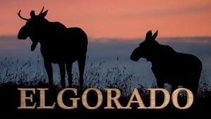 Elgorado: Skogens konge