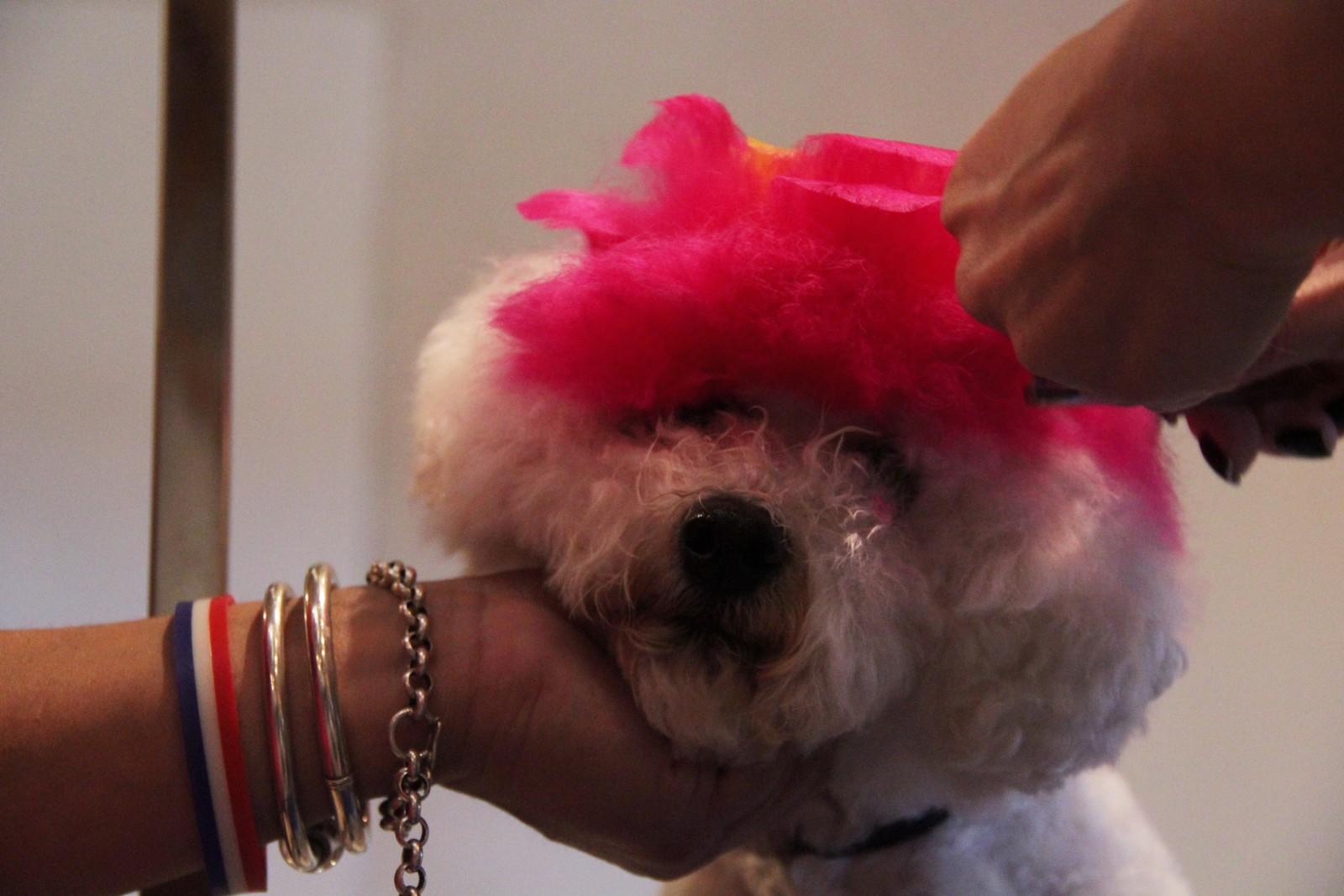Rosita er snaaaart ferdig med hårpynten.