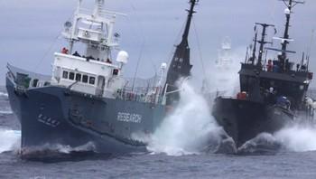 Et skip fra Sea Shepherd kolliderer med et japansk hvalfangststskip i Sørishavet