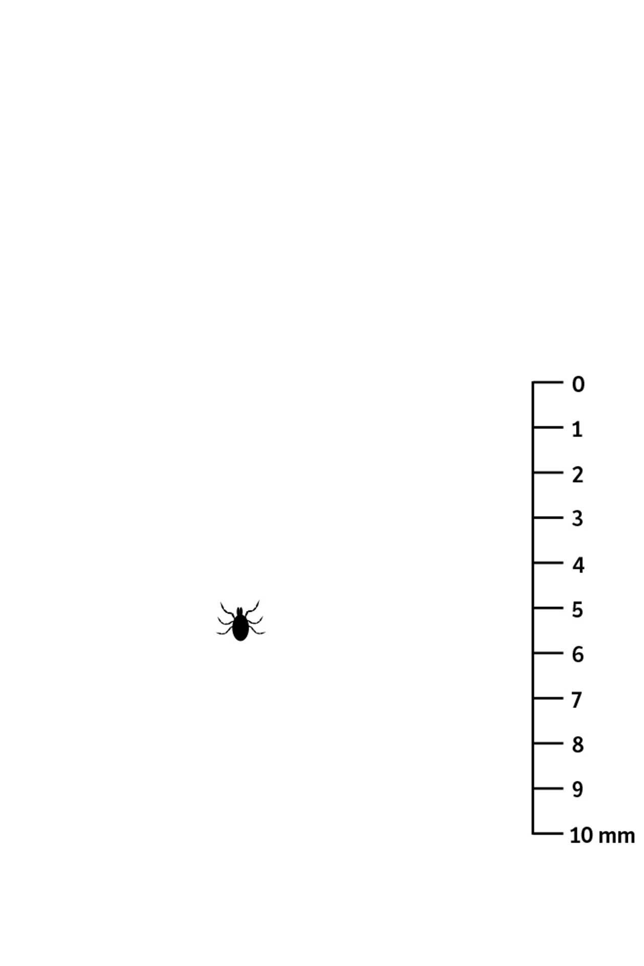 Flåttlarve