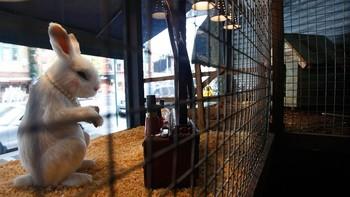 Forfengelig kanin