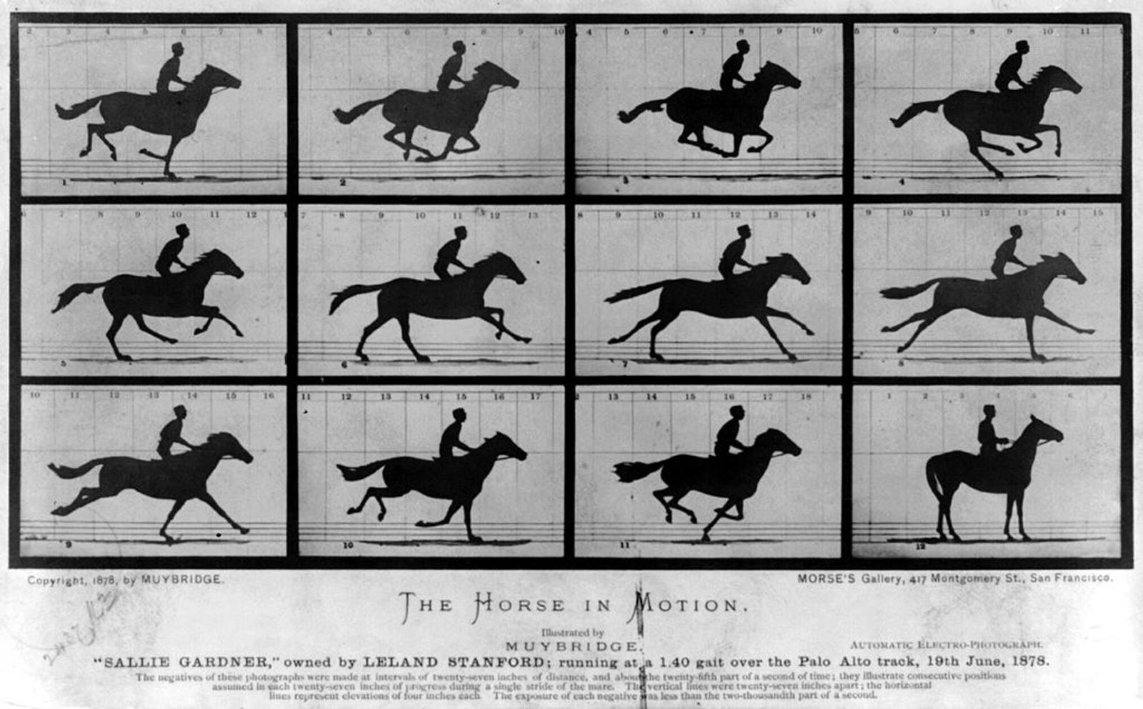 HEST I BEVEGELSE: Eadweard Muybridge anses som en pionér når det gjelder fotografisk bevegelse. Horse In Motion beviste blant annet at en hest i galopp har alle fire beina oppe fra bakken samtidig.