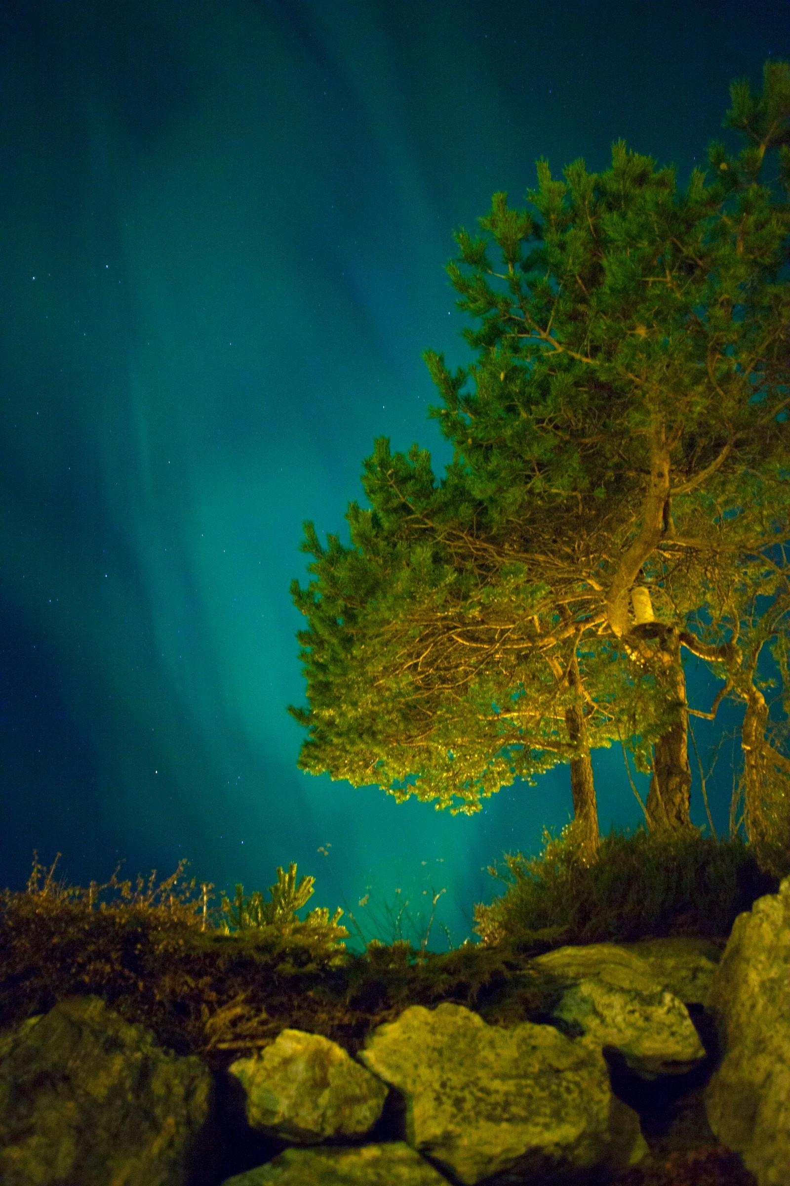 Nordlyset dansa over tretoppane i Florø