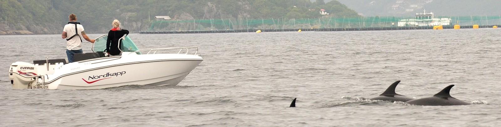 Delfinene var ikke redde for å nærme seg båtene som fulgte etter.