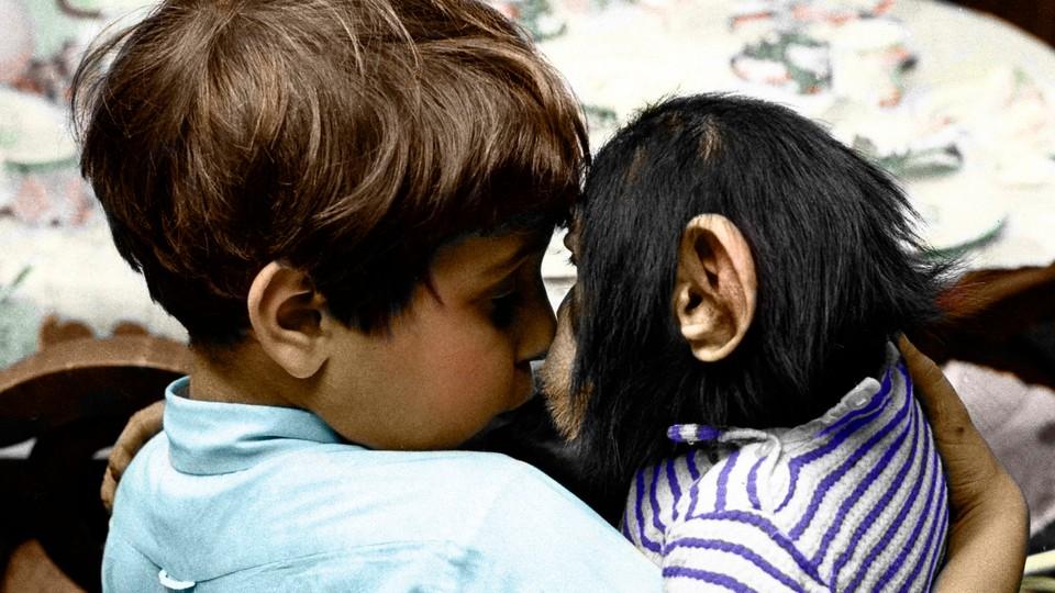 Boris - sjimpansen på Manhattan