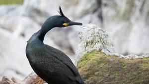 Fuglefjellet Hornøya - minutt for minutt