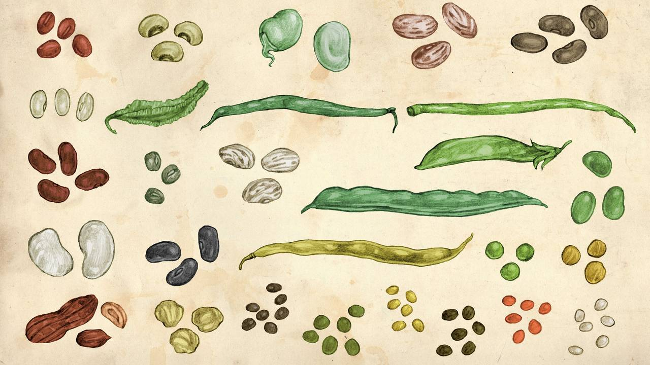 Fra kokeboka «Bønner, erter, linser» av Jenny Damberg.