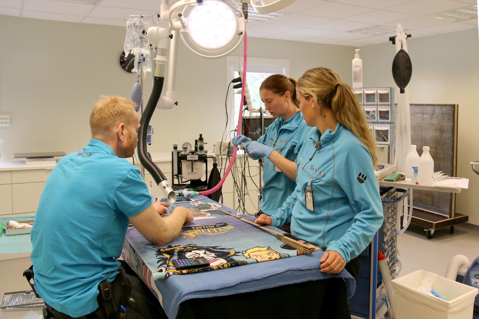 Operasjonene foregår i Dyreparken i Kristiansand.