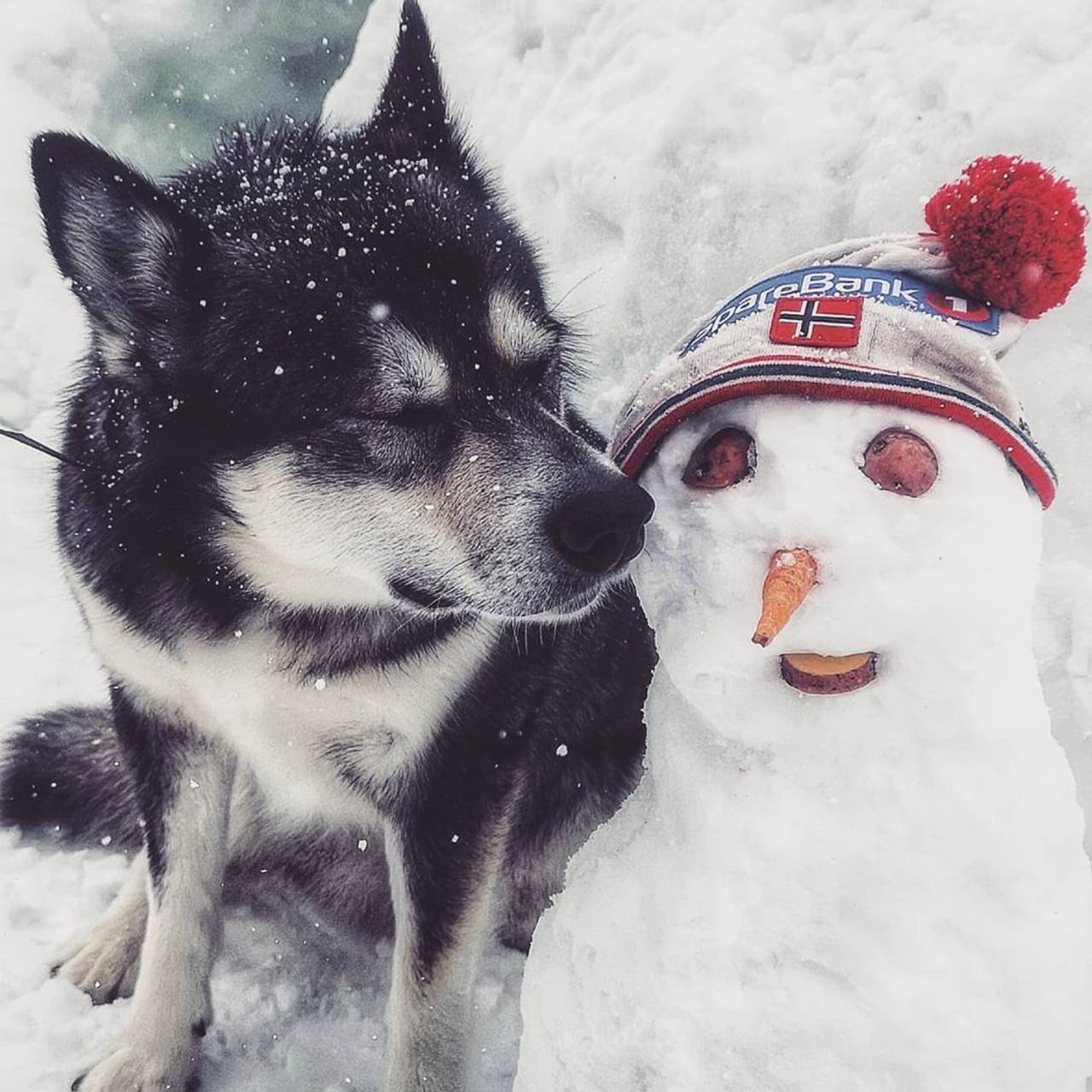 En hund og en snømann