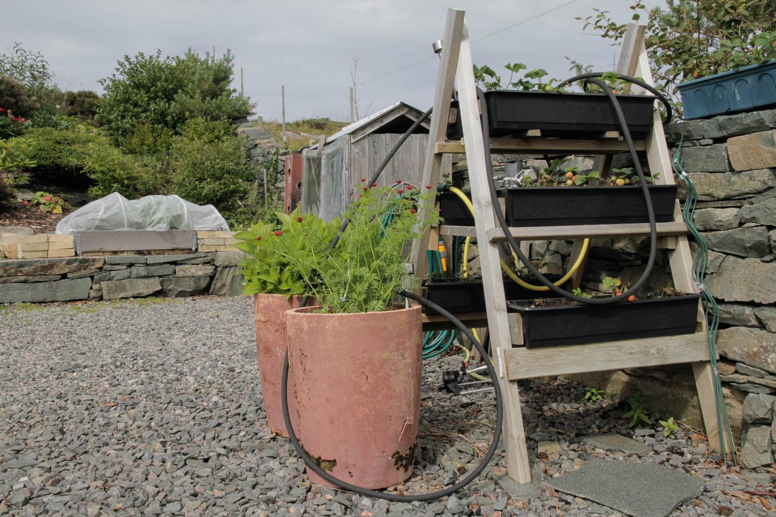 Når hagen er fylt til randen har Berit Steen bygd stativ for jordbæra sine. - Alt skal vere lett å halde, vi er trass alt begynt å bli gamle.