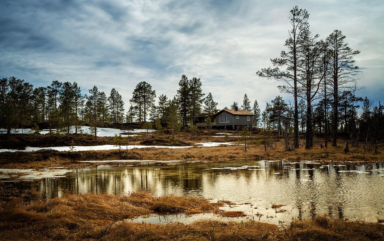 På Sondalsskogen i Skarvan og Roltdalen nasjonalpark