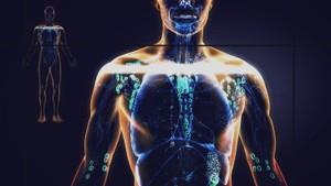 Kroppen og bakteriane