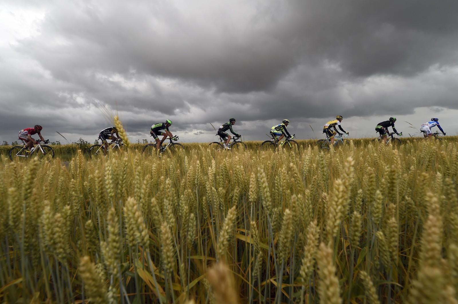 Alle Tour de France-billedgallerier må ha et par bilder av åkre. AFP PHOTO / ERIC FEFERBERG 560071863